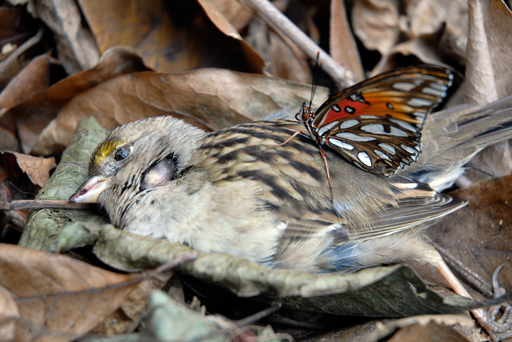 Dead Bird and Butterfly